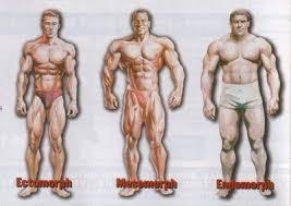 body builder. L endomorfo tende ad accumulare grasso! Deve fare attenzione  alle calorie e soprattutto ai carboidrati ad alto indice glicemico. 4faca480bbe9